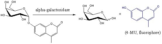 enzyme specificity using beta galactosidase and alpha galactosidase [alpha]-galactosidase and [beta  substrate specificity of the [alpha]-galactosidase was  whereas the ph optimum of the coffee bean enzyme for pnp-[alpha].